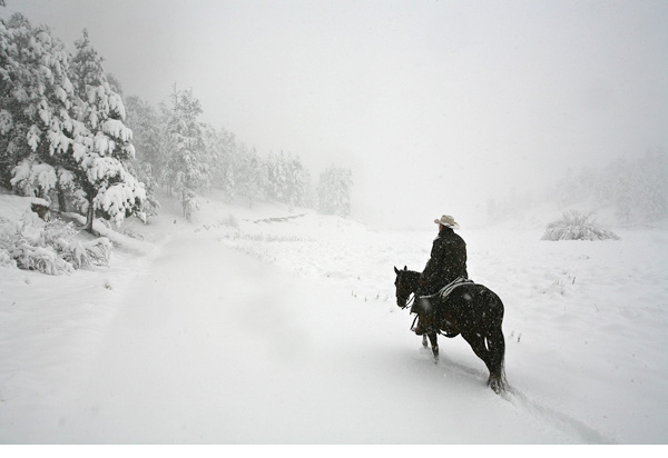 Single cowboy on horse in a blizzard