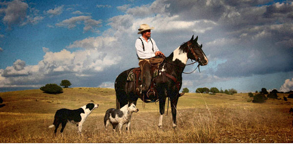 Myron Beck photo of cowboy on horse with dogs