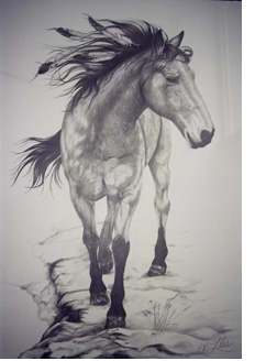 Portrait of horse Cricket