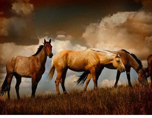 Myron Beck Horses Standing Photograph