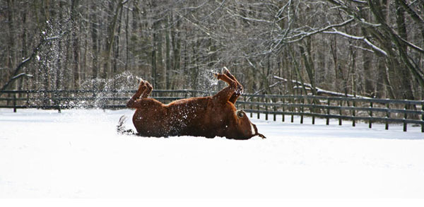 Nadine Levin photo of a horse on its back rolling in the snow