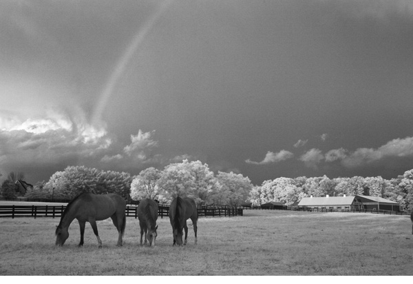 Horses in a pasture under a rainbow